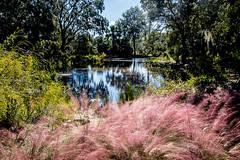 FB 20161128 Scen Pond Bok (1 of 1) (louiep_himself) Tags: 0dates 0events 0month 0naturepreserves 0scenic 0years 10oct 2016 boktg mandywedding pond weddings