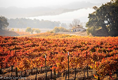 Wine Country (lorinleecary) Tags: house california vines templeton landscapes hills grapeleaves fog