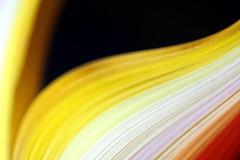 Le livre ouvert à la page vide du trou noir (Christian Chene Tahiti) Tags: canon 6d arcenciel rainbow papier paper lamelle bandelette macro macrolens polynésie jaune rouge orange bleu rose blanc tahiti paea bokeh