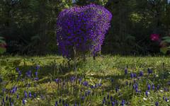 Front yard idyll in Ohmenhausen (KF-Photo) Tags: ölpaintselektiv 1610 busch kleineleiter ohmenhausen traubenhyazinthe vorgartenidylle teilspiegelung