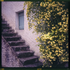simplicity (*altglas*) Tags: entreveaux old stairs window blossom mediumformat 6x6 color agfa50rs expired expiredfilm analog film superikonta zeiss