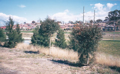 bridge trees (spelio) Tags: act canberra historic rain flood catchment riparian