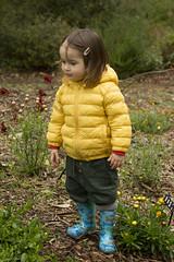 (louisa_catlover) Tags: garden nature outdoor karwarra karwarraaustraliannativebotanicgarden kalorama dandenongs autumn wet portrait family child toddler daughter tabitha tabby