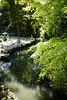 tamura 神社の新緑