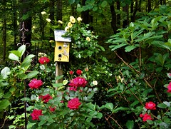 Roses at the AirBnB (camsdl) Tags: roses garden birdhouse