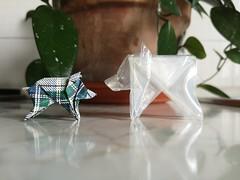 Little boar, cinghialetto - Stefano Borroni (Stefano Borroni (Stia)) Tags: origami origamipaper origamicdo origamilove origamiart piegarelacarta arte folding foldingpaper papiroflexia carta animali natura wwf boar cinghiale littleboar cinghialetto plastica scozzese kilt cdoitalia