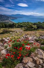Spring view (Vagelis Pikoulas) Tags: spring may 2019 psatha beach sea seascape landscape nature greece europe tokina 1628mm canon 6d flowers flower poppies poppy