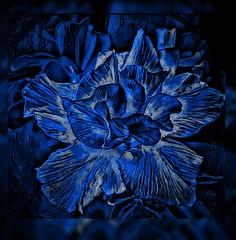ReNewed in Blue (jlynfriend) Tags: phonephoto lg flower desertrose blue art design color border blur smileonsaturday blueforyoume2019