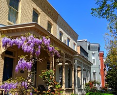 wisterias (ekelly80) Tags: dc washingtondc april2019 spring flowers capitolhill houses rowhouses purple porch