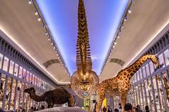 41-Squelette de baleine (Alain COSTE) Tags: bordeaux gironde france jardinpublic museum 2019 nikon