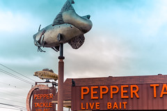The catfish chases the bass (sniggie) Tags: peppertackle baitstore bassstatue catfishstatue fishingstore livebait sign signage vintagesign