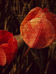 Counting Flowers on the Wall (Dave Linscheid) Tags: flower tulip bloom texture textured smartphotoeditor