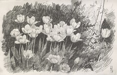 Yelow tulips (Bohdan Tymo) Tags: tulip flowers spring drawing pencil