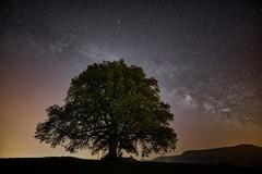 Die Linde (SonjaS.) Tags: linde nachtfotografie milkyway milchstrase sterne schwäbischealb canoneos6dmarkii canon163528 weitwinkelobjektiv freunde klärenacht frühling spring stars
