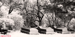 At rest (DelioTO) Tags: 6x12 architecture blackwhite canada cemetery city d23 efkeir820 expired f317 historical ir pinhole r09180 r72 spring