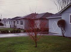 Sunnyvale, California (bior) Tags: pentax645nii pentax645 6x45cm ektachrome e200 kodakektachrome slidefilm mediumformat 120 sunnyvale street rain suburbs house yard lawn tree