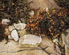 rock & colourful seaweed | Loch Eriboll | Sutherland (Weir View) Tags: photo intimatelandscape locheriboll sutherland scotland seaweed colour rocks