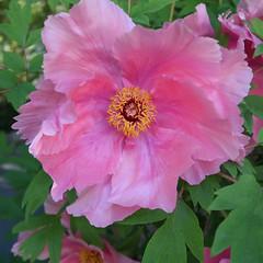 Botanic Garden 053c (Andras Fulop) Tags: budapest hungary botanicgarden botanishergarten flower canon