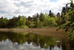 Lac du Merle (Iris@photos) Tags: france occitanie tarn sidobre merle lac printemps