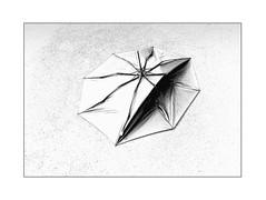 quite dead umbrella (Armin Fuchs) Tags: arminfuchs umbrella kassel huawei smartphone diagonal