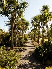 mull of galloway logan botanic garden-4131517 (E.........'s Diary) Tags: eddie ross olympus omd em5 mark ii spring 2019 logan botanic garden mull galloway dumfries