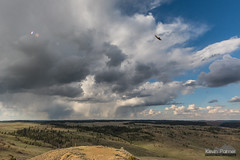 Soaring Hawk and Virga (kevin-palmer) Tags: diamondbutte montana custernationalforest storm weather virga rain clouds evening scenicview hills sigma14mmf18 sky hawk flying bird nikond750
