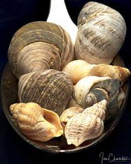 Shells, no Cheese. (Ian Charleton) Tags: macromondays macro shells spoonful utensil blackbackground closeup spoon coking pasta shell shellfish silver silverware