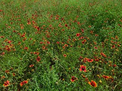 Wildflower, Wildflower, Wildflower, Wildflower!