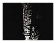 * (Daniel Espinoza) Tags: bw kodaktmax400 essence film film120 onlyfilm danielespinoza filmphotography mediumformat mamiya minimalist mexico analogphotography pellicola analogica fineart