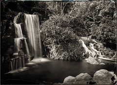 Waterfall - Wet Collodion Negative (Blurmageddon) Tags: 5x7 wetplatecollodion newguycollodion epsonv700 senecaimprovedview landscape arboretum losangelescountyarboretumandbotanicalgardens nature naturallight waterfall glassnegative newguynegativecollodion collodionnegative