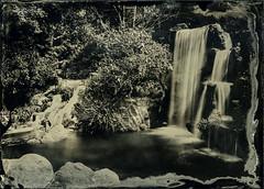 Waterfall - Black Glass Ambrotype (Blurmageddon) Tags: 5x7 wetplatecollodion newguycollodion epsonv700 senecaimprovedview landscape arboretum losangelescountyarboretumandbotanicalgardens nature naturallight waterfall blackglassambrotype bga