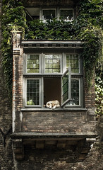 waiting for Romeo | Bruges (Weir View) Tags: photo intimatelandscape bruges belgium julietbalcony dog waiting romeo humour