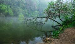 Misty Morning (Nikon Guy 56) Tags: nature misty water reflection landscape waterscape peterslake trees nikon d5300