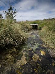 Tourbière de Longeyroux (ultimumpicture) Tags: nature nikon tourbière millevaches corrèze eau ruisseau paysage