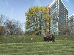 spring cleaning (dklfl) Tags: green grass garden trim mow milwaukee mke wisconsin wi lines spring cleaning