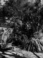 mull of galloway logan botanic garden-4131532 (E.........'s Diary) Tags: eddie ross olympus omd em5 mark ii spring 2019 logan botanic garden dumries galloway mull mono black white plants botanics