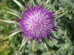 May 13: Purple Flower