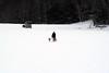 IMG_7071_AutoColor (LifeIsForEnjoying) Tags: husky huskies dog dogs mushing nike kaskae sitka snow