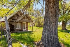 Poignant (KPortin) Tags: htt trees abandonedhouse fence