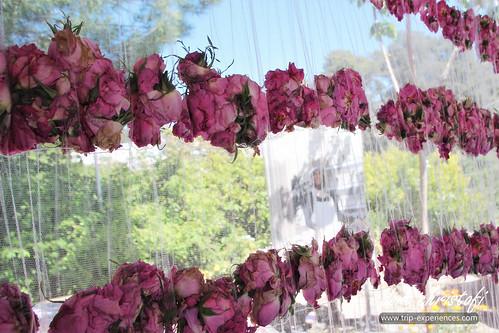 Agros Rose Festival 2019