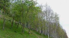 VISITA AL MOLLÓ PARC (Joan Biarnés) Tags: visitaalmollóparc molló ripollès girona paisatge paisaje 315 panasonicfz1000