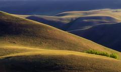 Рельеф #maksileni, #Максименко_Леонид, #Leonid_Maksimenko, #hqsplandscape, #BTPLandscapePro, #Landscapephotography, #своифото, #пейзаж, #природа, #утро, #рассвет, #дерево, #натура, #восход, #sunrise, #nature, #tree, #Landscape, #sun, #туман, #лучи, #foggy (ЛеонидМаксименко) Tags: рельеф uralinsta maksileni leonidmaksimenko natgeoru урал foggy nature природа натура hqsplandscape горы дерево etonashural sun рассвет своифото sunrise natgeorussia landscapephotography пейзаж восход утро лучи tree landscape btplandscapepro natgeoyourshot туман максименколеонид