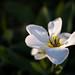 White flower on dark backgorund