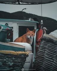 He doesn't want to go fishing (EvNikolas Photography) Tags: skopelos island greece vacation travel europe spring cat animals nikon nikond3200 photography nikolasevaggelinos evnikolasphotography