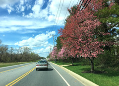 early April road shot (karma (Karen)) Tags: pikesville maryland trees blossoms roadshot clouds poles wires htt