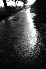 Another rainy day (Nikon F80) (stefankamert) Tags: rain rainy street textures film analogue analog grain wet nikon f80 voigtländer ultron kodak trix glittering blur blurry blackandwhite blackwhite noir noiretblanc bw