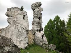 Jura (piotr_szymanek) Tags: outdoor landscape tree forest green rock 1k 20f