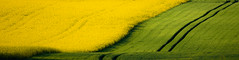 FlickFriday: I love spring (Valérie C) Tags: flickrfriday panorama landscape canola field agriculture nature country spring yellow nikon
