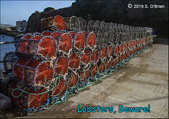 Lobsters, Beware! (mazurka666) Tags: lobsterpots lobsters coppercoast countywaterford contaephortláirge suirvalleyphotographicgroup seánobrien nikond3200