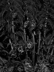 mull of galloway logan botanic garden-4131570 (E.........'s Diary) Tags: eddie ross olympus omd em5 mark ii spring 2019 botanic garden logan mull galloway